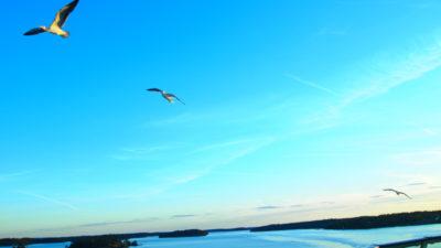 タリンクシリヤラインから見るバルト海