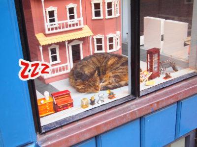 デンマーク・オーデンセの町で見かけた猫
