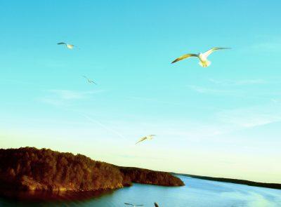 バルト海のかもめ
