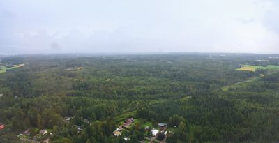 フィンランドの森