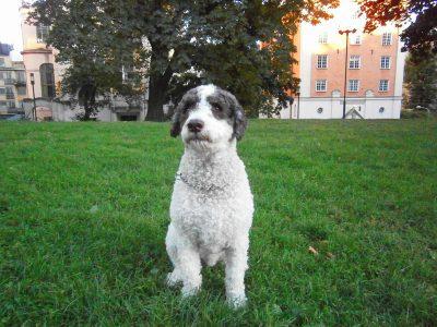 テグネルルンデン公園で出会った犬