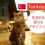 アヤソフィア博物館と猫のグリさん | イスタンブール観光