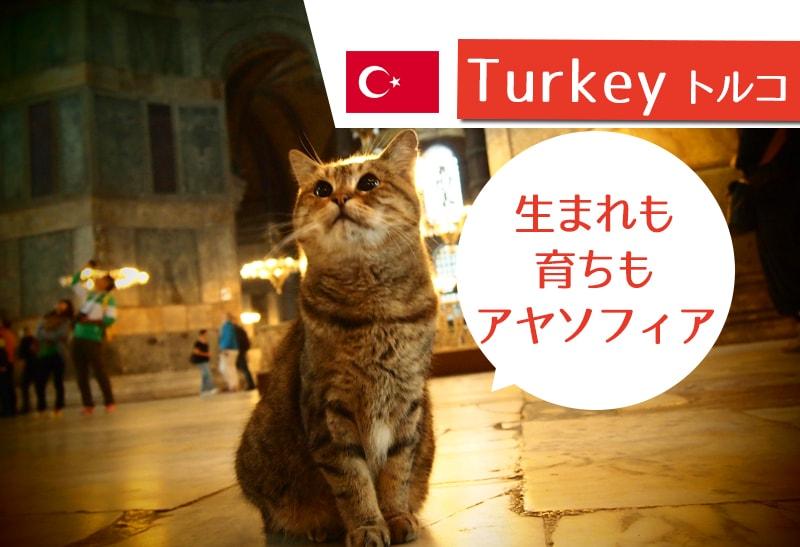 【イスタンブール観光】アヤソフィア博物館と猫のグリさん