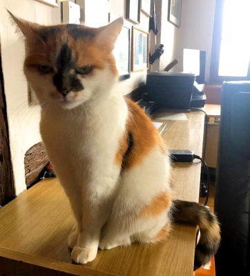 ダニエル塔の猫