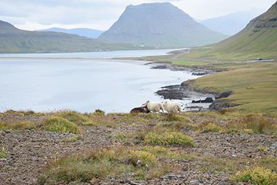アイスランドスナイフェルスネス半島の風景
