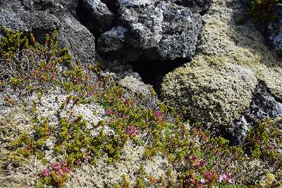 アイスランドの苔大地