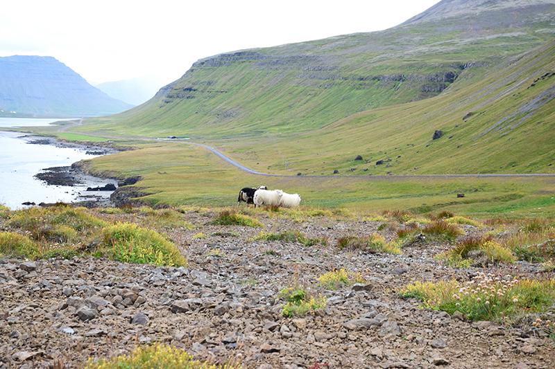 アイスランドのスナイフェルスネス半島の景色