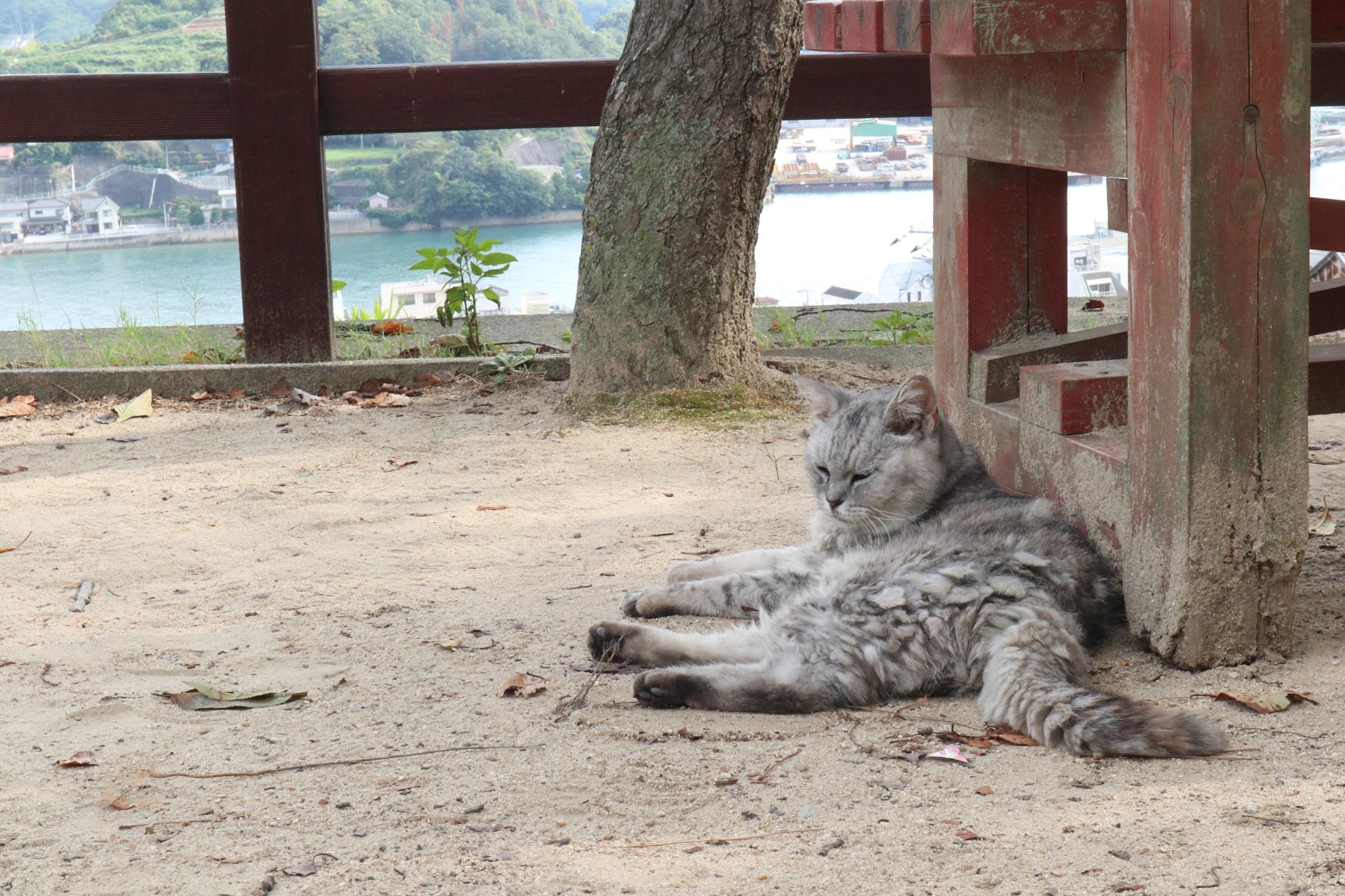 尾道千光寺下の猫のいる公園