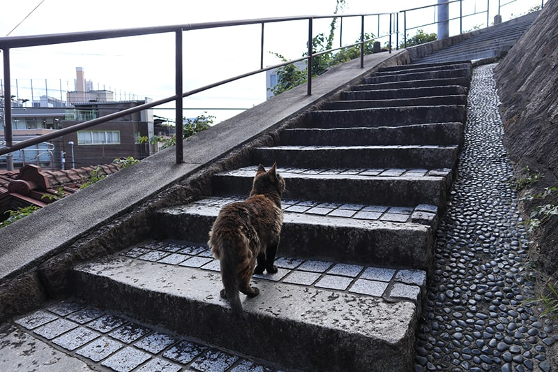 尾道の階段と猫