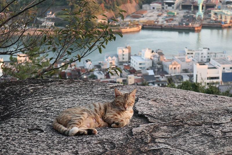 千光寺鼓岩(ポンポン岩)と猫
