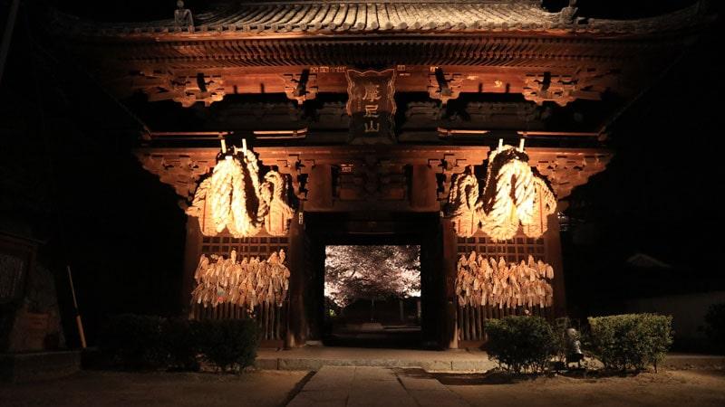 尾道西國寺の夜桜